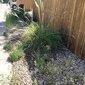 Overgrown Weeds